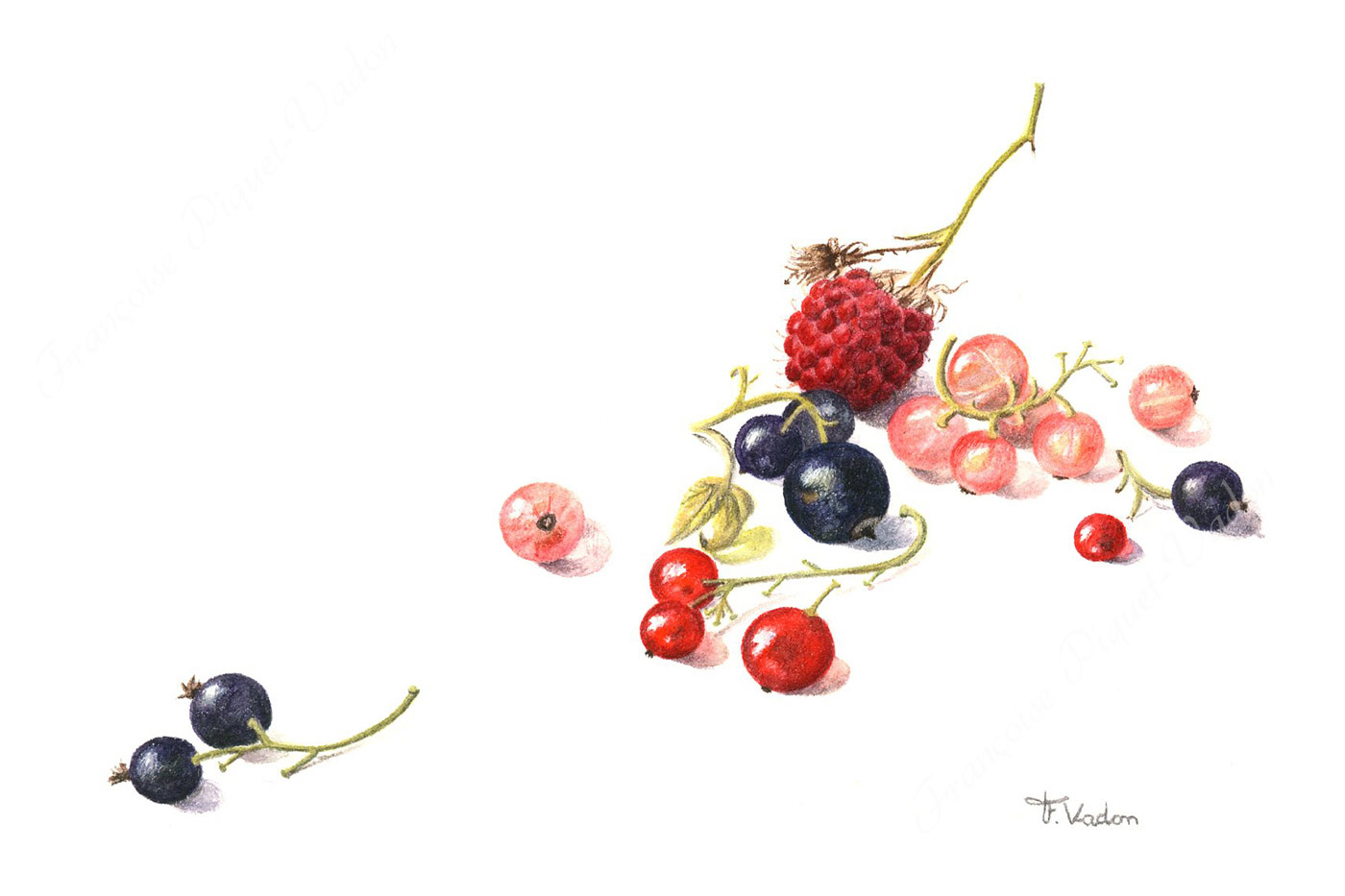 Composition fruits rouges aquarelle botanique